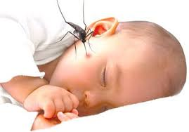 Baby in dengue fever condition